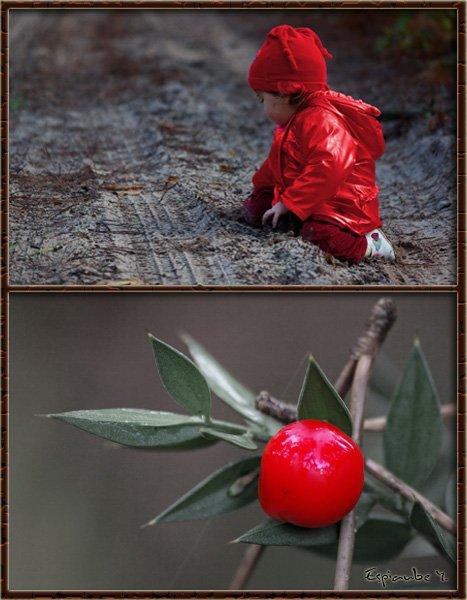 fruitsdesbois.jpg